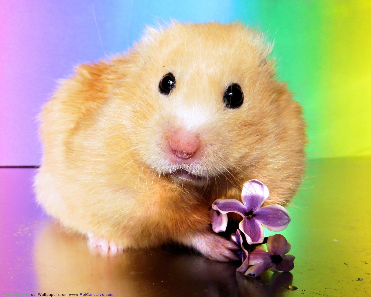 pics photos wallpapers funny hamster