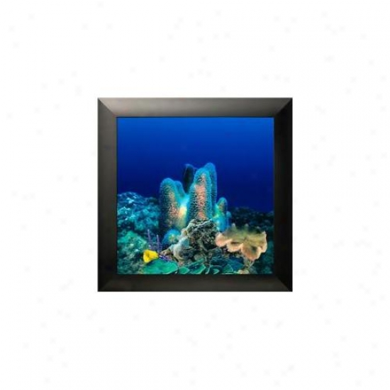 Aquavista Av500crba Wall-mounted Aquarium Av 500 Coral Reef Bacckground With Black Frame