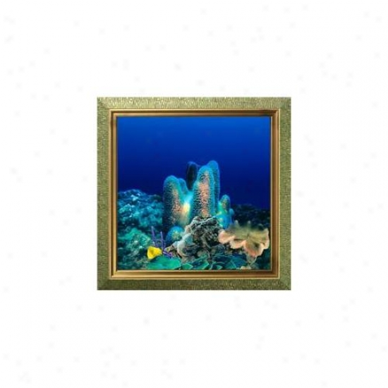 Aquavista Av500crbaaq Wall-mounted Aquarium Av 500 Coral Reef Background With Aquarius Frame