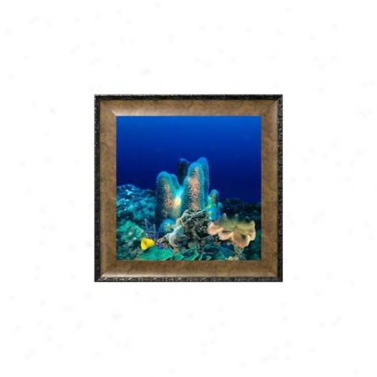 Aquavista Av500crbale Wall-moubted Aquarium Av 500 Coral Reef Background With Leo Frame