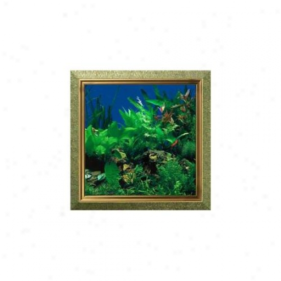 Aquavista Av500sbaaq Wall-mounted Aquarium Av 500 Seaweed Background With Aquarius Frame