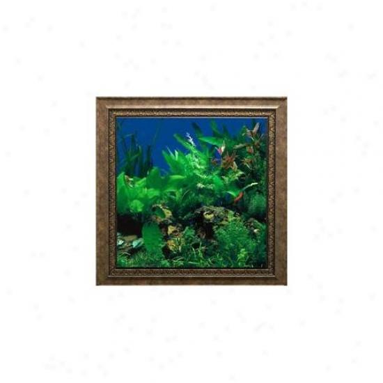 Aquavista Av500sbasc Wall-mounted Aqua5ium Av 500 Seaweed Background With Scorpio Frame