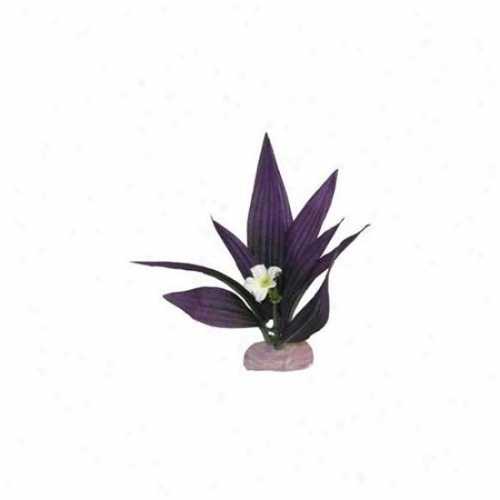 Boue Ribbon Pet Products Ablcb107pl Plant - African Seotd With Flowers Mini Plum
