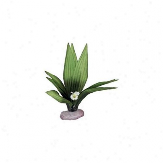 Blue Ribbon Pet Products Ablvb109gr Plant - Flowering Sword Leaf Clump Mini Green