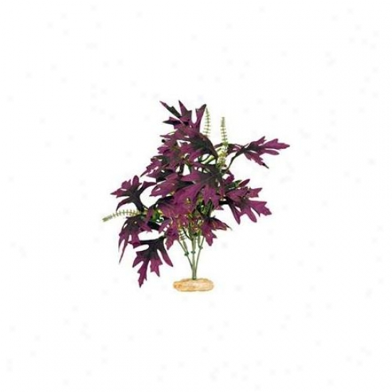 Blue Ribbon Pet Products Ablcb305pl Plant - Amazn Butterfly Leaf With Buds Deep Plum