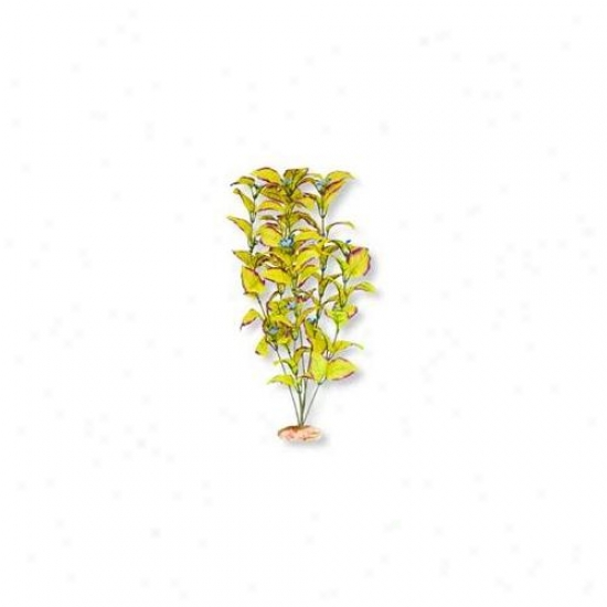 Blue Ribbon Pet Products Ablcb404yw Plant - Flowering Willow Leaf Large Plum-yel