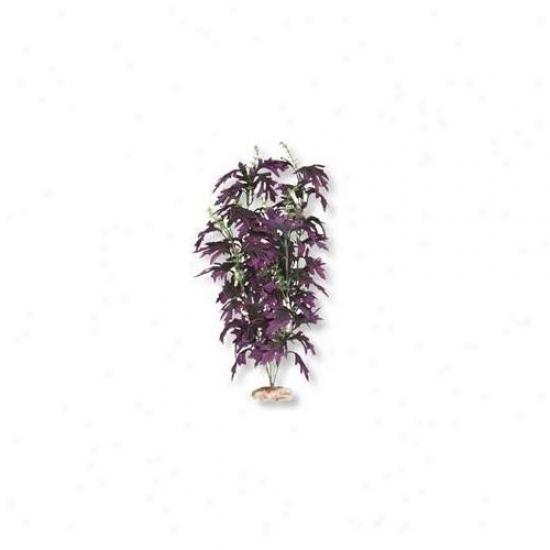 Blue Ribbon Pet Products Ablcb405pl Butterfy Leaf Large Plum Plant
