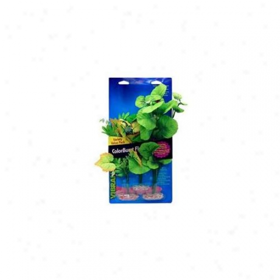 Blue Ribbon Pet Products Ablcblvp2 Plant - Multipack Broad Leaf Flowering Grow in bunches