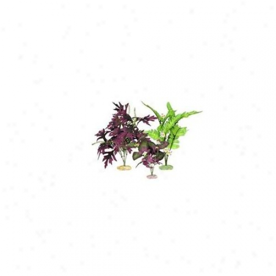Blue Ribbon Pet Products Ablcbmvp1 Plant - Multipack South American Flowering Cluster