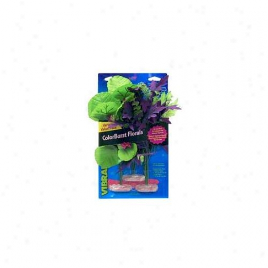 Blue Ribbon Pet Products Ablcbmvp33 Plant Multipack Amazon Flowering Cluster