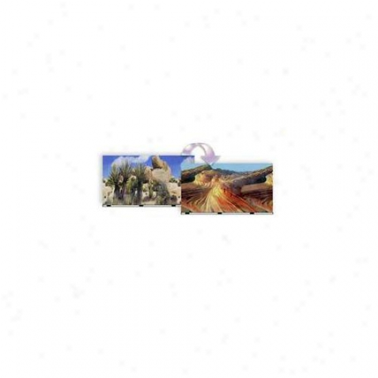 Blue Ribbon Pet Products Ablvsb1419 19 Inch X 50 Ft.  Background Desert Sand-cactus