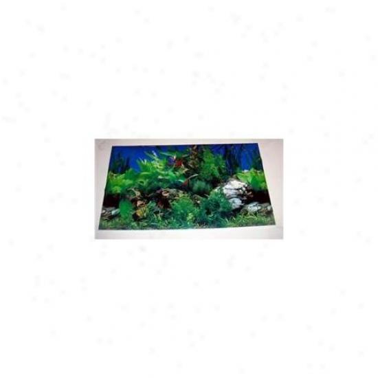 Bulk Buys Scenic 2-sided Plastic Aquaium Poster Backing - Case Of 72