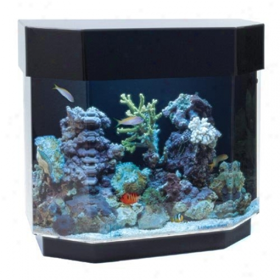 Desktop 12 Gallon Uniquarium-flat-back Hexagon Aquarrium Sey