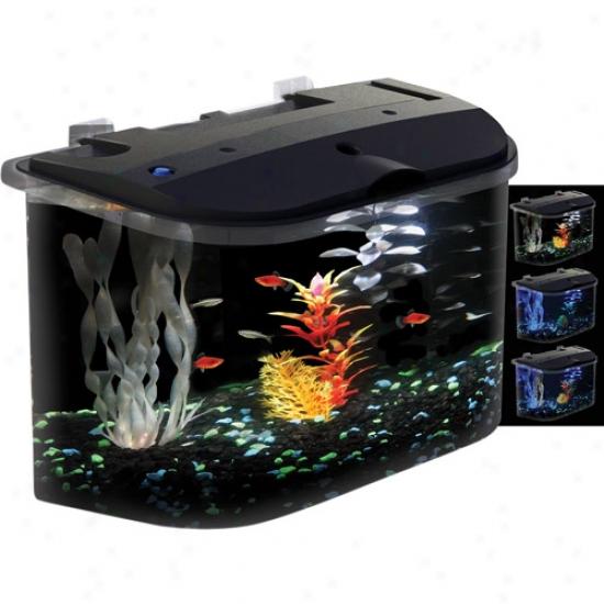 Koller-craft Glofish 5 Gal Aquarium Kit In the opinion of Led Lighting And Internal Filter