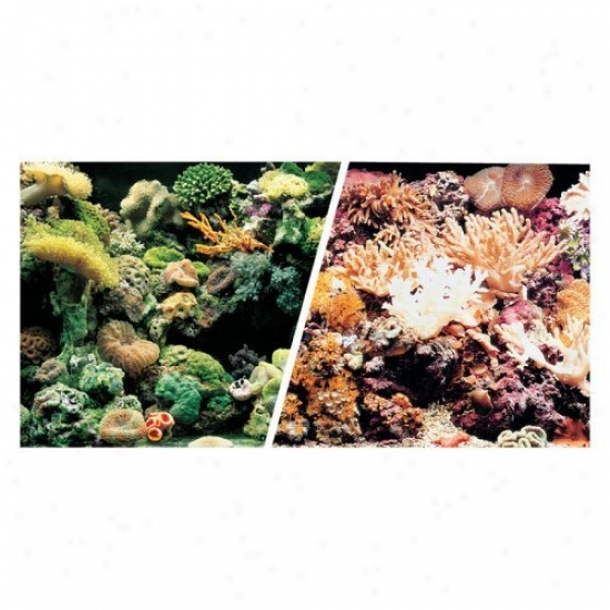 Marina Saltwater Aquarium Background - Marine Reef/coral