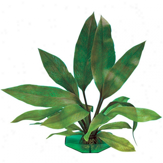 Penn Plax Aqua Culture Amazon Sword Large Aquarium Plant Decoration