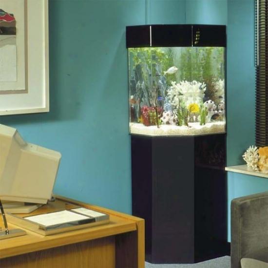 Pentaview Triangle Corner 35 Gallon Aquarium With Stand