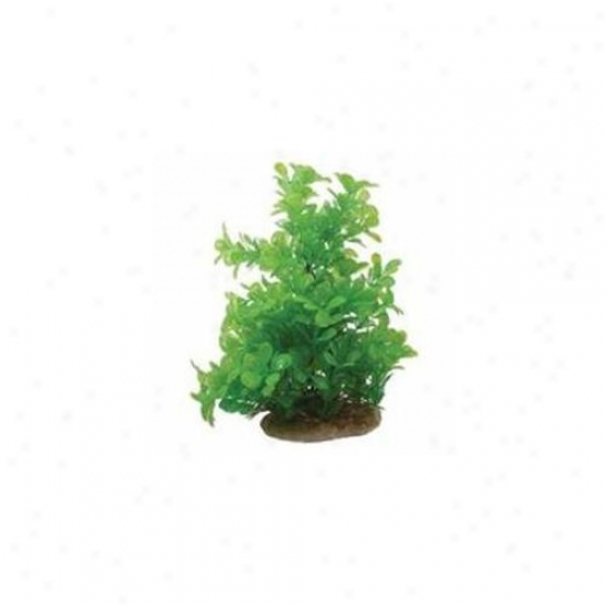 Pure Aquatic 029167 10-12 Inch Essential Elements Moneywort - Green