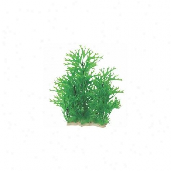 Genuine Aquatic - Natural Elements Antler Fern Combo- Green 12-18 Inch - 252712