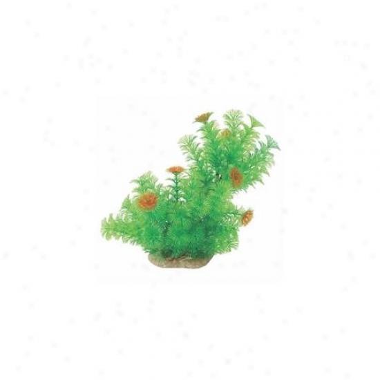 Pure Aquatic - Natural Elements Cabomba- Green-orange 10-12 Inch - 252685