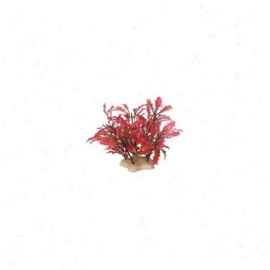 Pure Aquatic Natural Elements Crimson Water Holly Aquarijm Ornament In Crimson