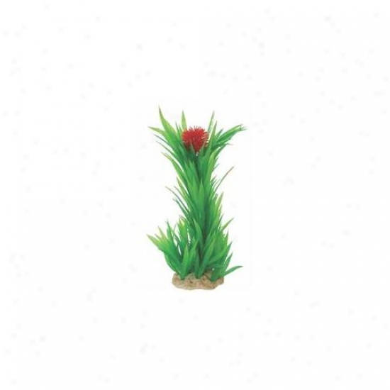 Pure Aquatic - Natural Elements Flowering Blyxa- Green-red 8-12 Inch - 252722
