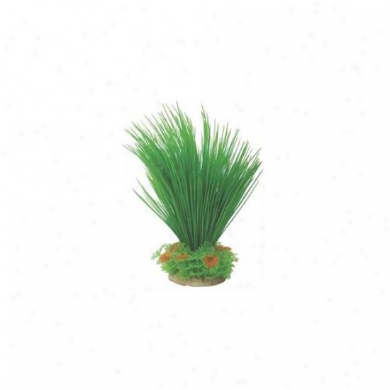 Pure Aquatic - Natural Elements Hairgrass- Green-orange 8-12 Inch - 252726