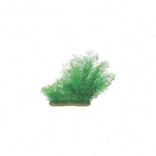 Pure Aquatic - Natural Elements Java Moss- Green 10-16 Inch - 252716