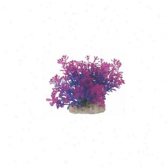 Pure Aquatic - Natural Elements Lindernia- Purple 5-6 Inch - 252695