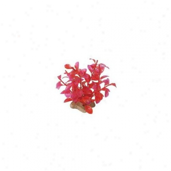 Pure Aquatic Natural Elements Ludwigia Crimson Aquarium Ornamet In Crimson