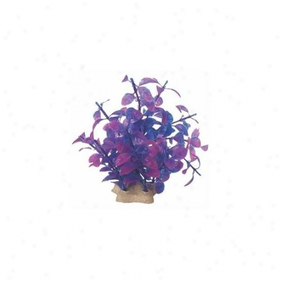 Pure Aquatic - Natural Elements Ludwigia Technicolor- Purple 5-6 Inch - 252697