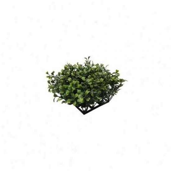 Rc Hagen 12191 Fluval Chi Boxwood Ornament