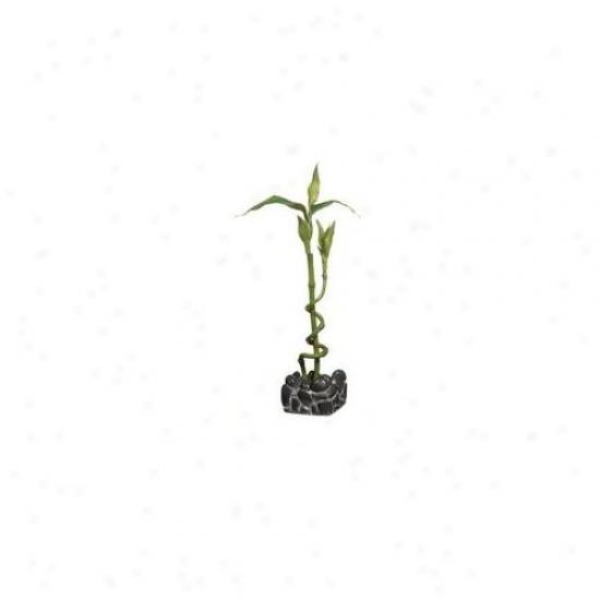 Rc Hagen 12201 Marina Betta Kit Bamboo Ornament