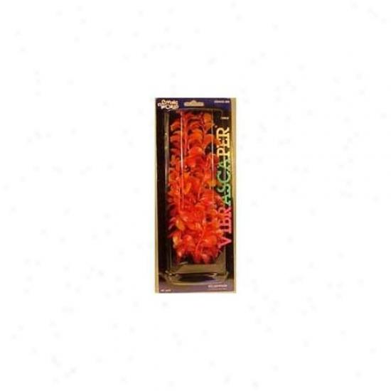 Rc Hagen Pp1249 Red Ludwigia, Orange-red