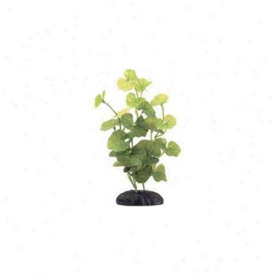 Rc Hagen Pp187 Marina Hydrocotyle Leucocephala, 8 Inch Silk Decorative Plant