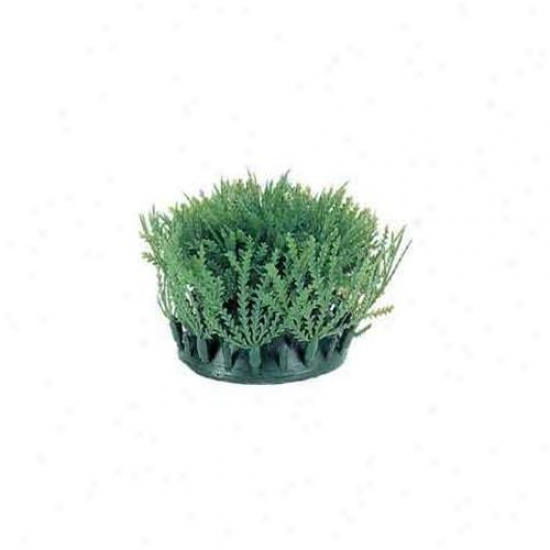 Rc Hagen Pp200 Marina Willow Moss Mat Ground Cover Decodative Plant