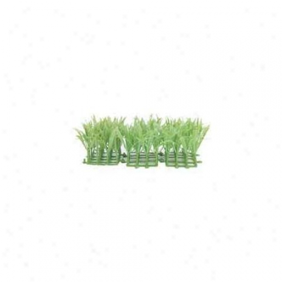 Rc Hagen Pp270 Marina Confine Amazon Ground Cover Decorztive Plant - 3-pack