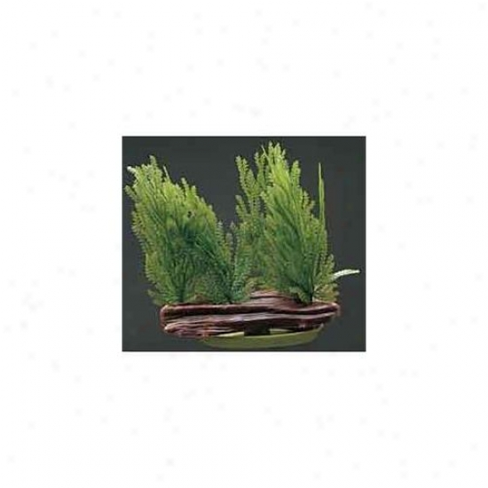 Rc Hagen Pp312 Marina Willow Moss Foreground Decorative Plant