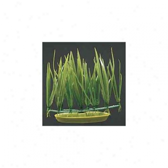 Rc Hagen Pp315 Marina Micro Sagittaria Foreground Decorative Plant