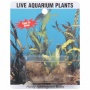 Sea-life Plants Ignited Aponogeton Aquarium Bulbs, 1ct