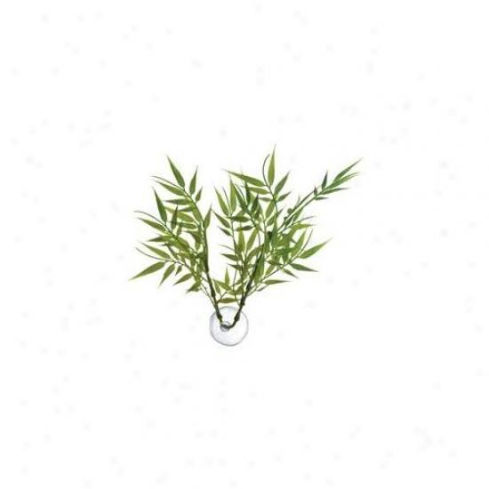 Zoo Med Laboratories - Bamboo Betfa Engender - Bp-22