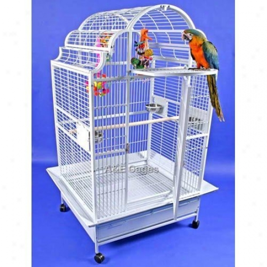 A&e Cage Co. Palmetto Victorian Bird Cage