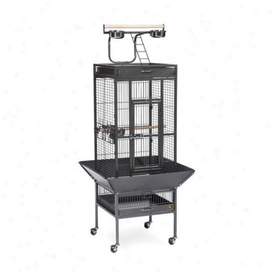 Prevue Hendryx Sigbature Series Select Wrought Iron Cage - 18x18x57