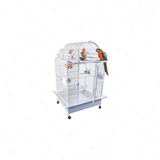 A&e Cages Ae-gc6-4032-w Large Victorian Scalloped Top Bird Cage - White