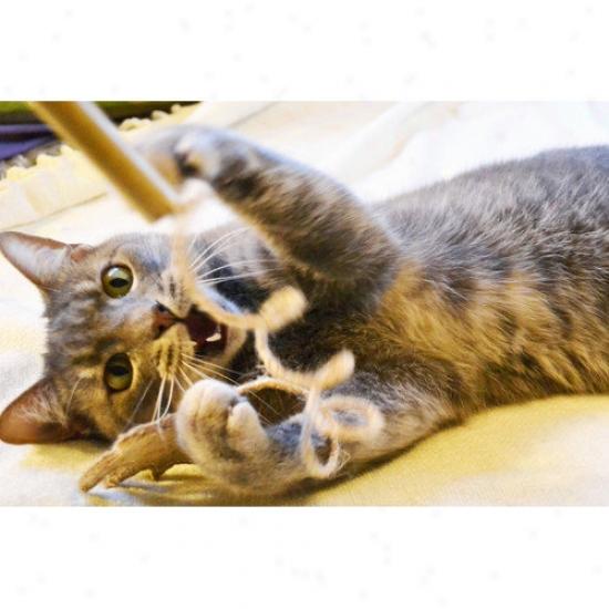 Abo Gear Cat Toy Set