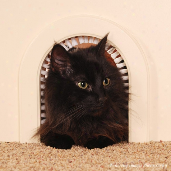 Cat-hole Pet Passage Cat Furniture