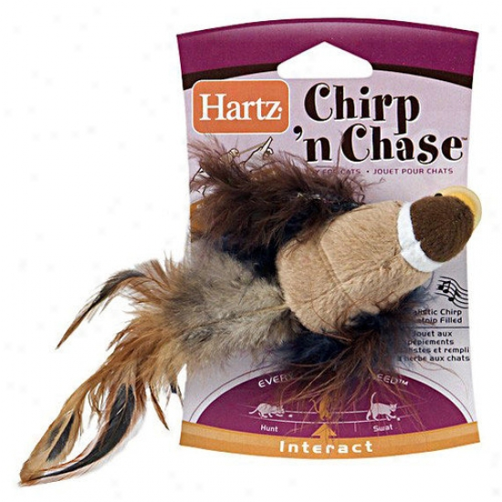 Hartz Chirp 'n Chasw Cat Toy