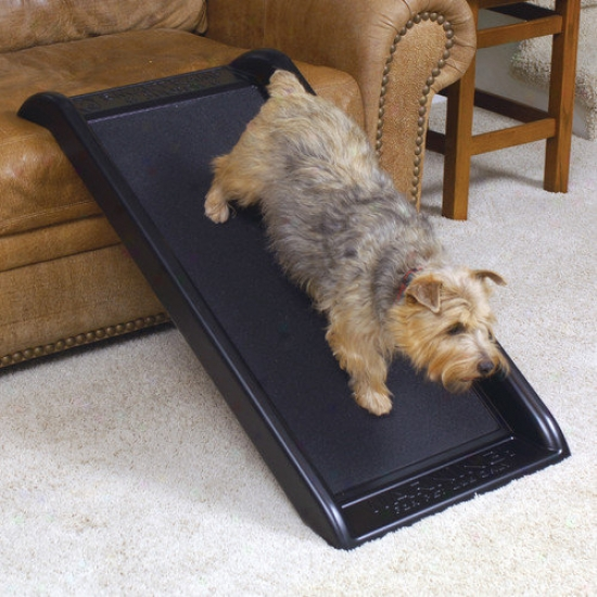 Mr. Herzher's Smart Pet Ramp Junior