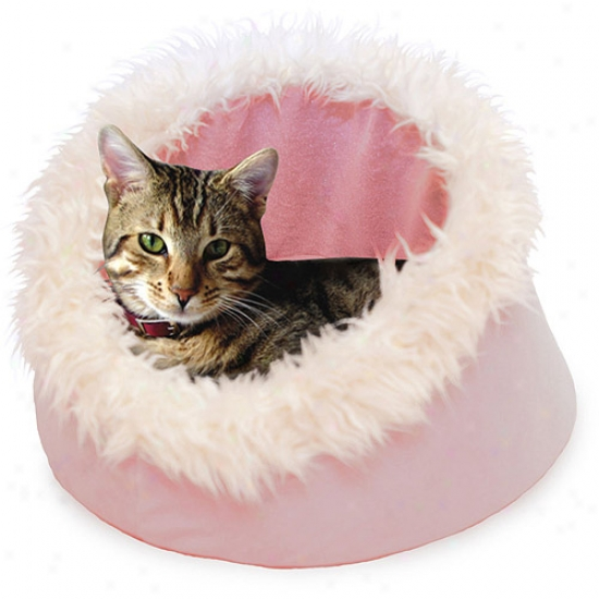 Paw Feline Cat Comfort Cavern Favorite Bed