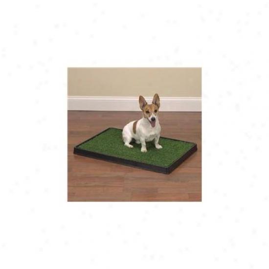 Pet Pals Zw7047 20 Clean Accept Pet Indoor Dog Potty 20x30 In